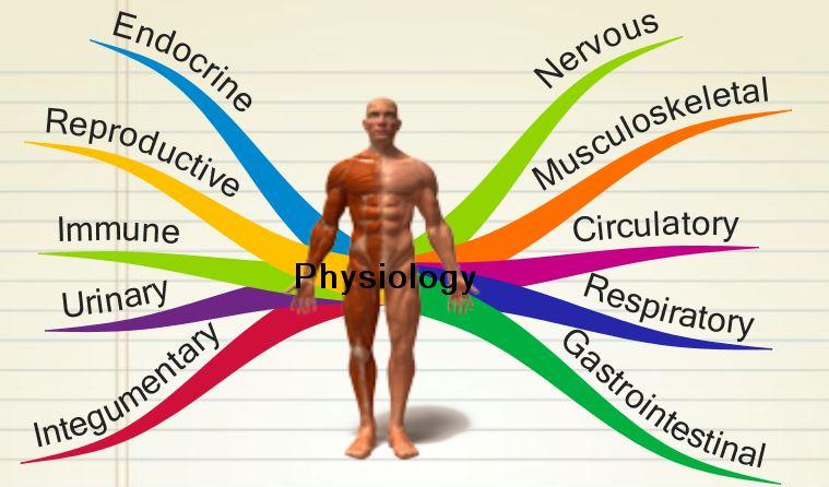 Physiology.jpg