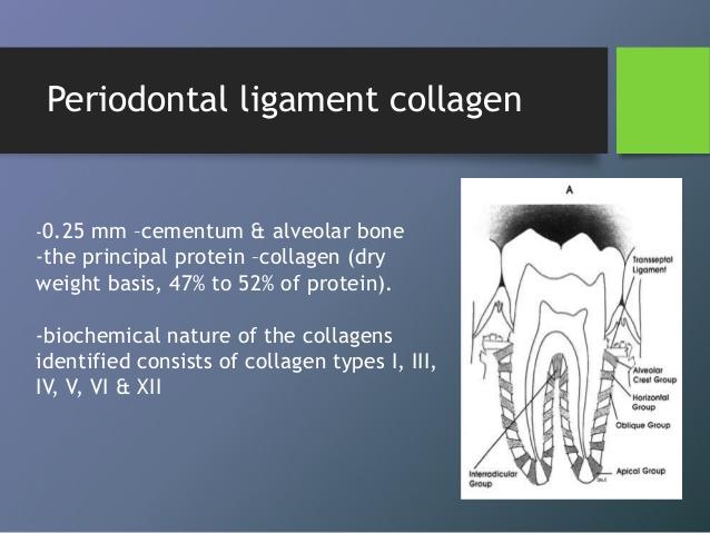 collagen-51-638.jpg