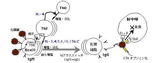 imm-fig2.jpg