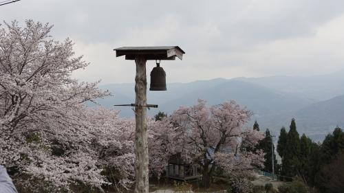 th_つるぎ町柴内ひょうたん桜と桜堂