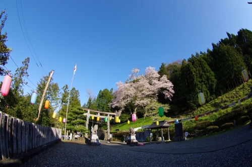 th_御所神社と吉良エドヒガン
