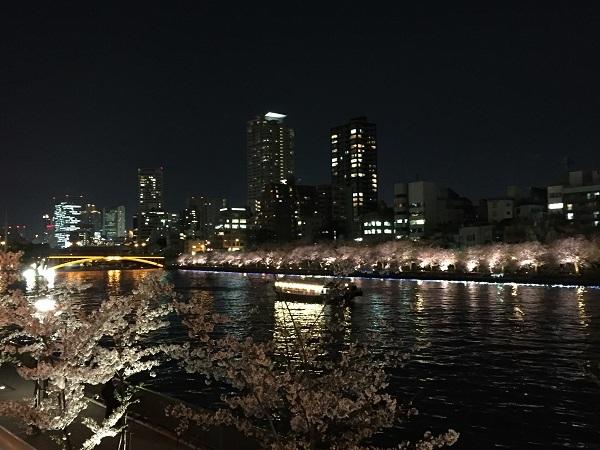 大川の桜 001