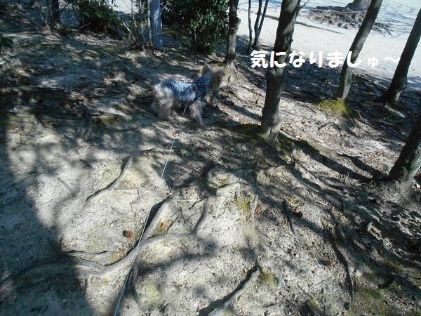 DSCN3024.jpg
