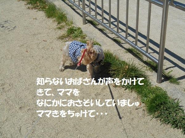 DSCN3788.jpg