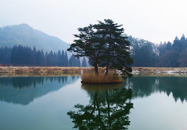 矢巾町のため池の松