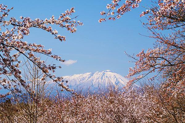 紫波町 城山公園の桜と岩手山