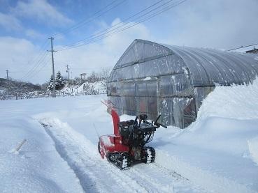 ハウス前除雪