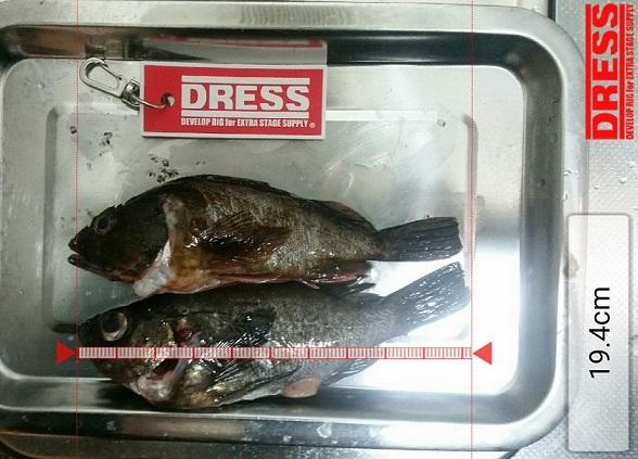 dress_05032017_123802.jpg