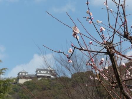 堀之内公園 梅 と 松山城
