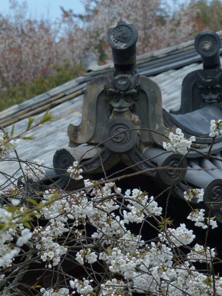 大宝寺 うば桜 9