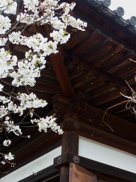 大宝寺 うば桜 10