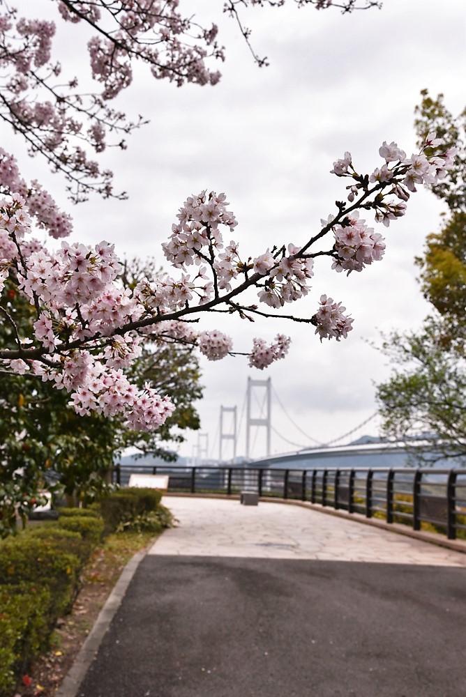 DSC_2202糸山公園