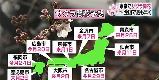 21_mar_sakura 1