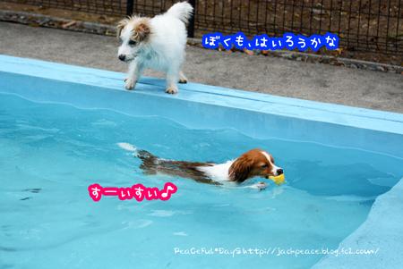 170406_pool1.jpg