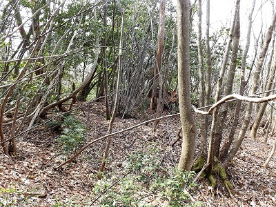 編集_あわら市東山上野山城跡の踏査2017年3月26日 (8)