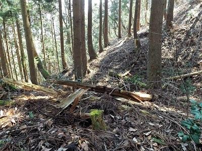 2017年3月大野市茶臼山城跡の踏査(ブログ用) (11)