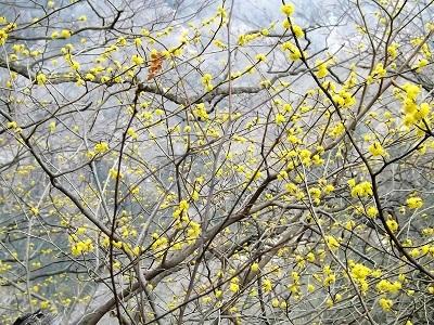 2017年4月1日大野市牛ヶ原城跡の踏査 (28)