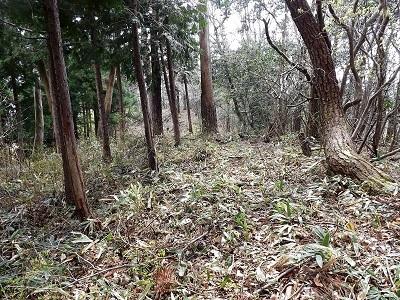 2017年4月13日織田城跡の踏査(ブログ用) (14)