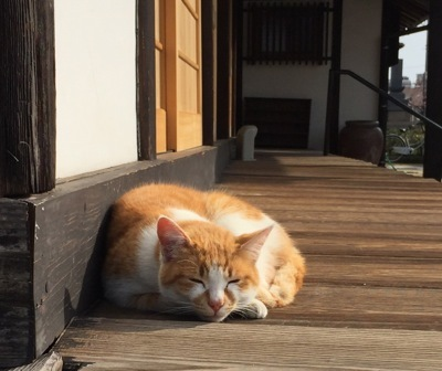 IMG_4313 猫2