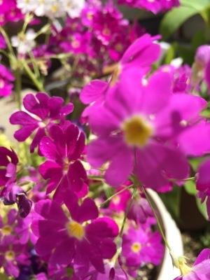 IMG_4424 花