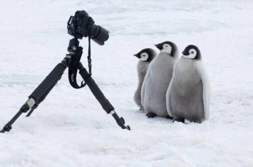 ペンギン撮影