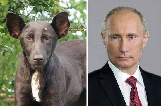 プーチン&犬