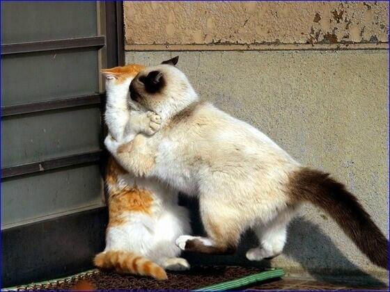 cats壁ドン