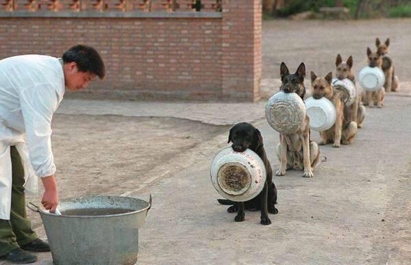 dogs順番待ち
