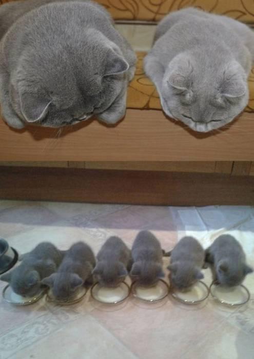 catミルク