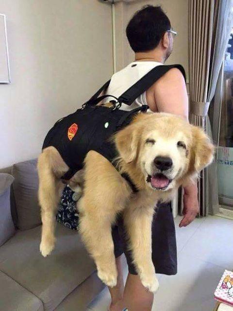 dogおんぶ2