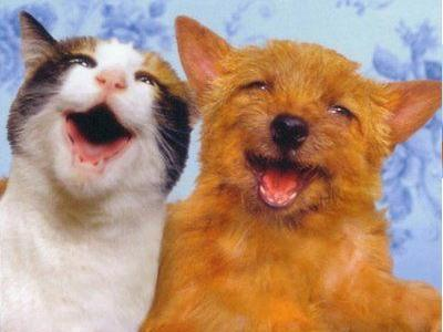 catdog笑顔