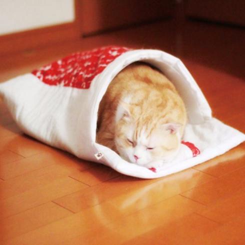 cat布団