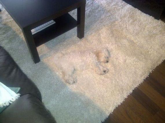 dog同化した犬