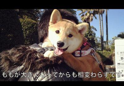 愛犬の抱っこ癖が抜けない Let me pick you up