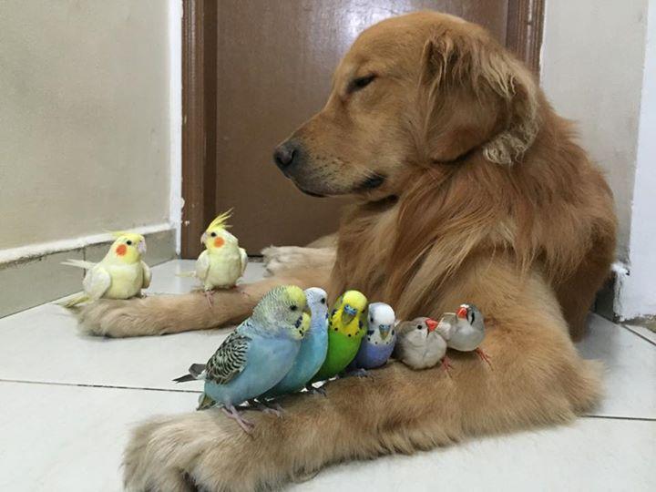 dogbirds3_s.jpg