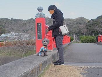 うちのこ記念旅行菜の花畑20170307-1
