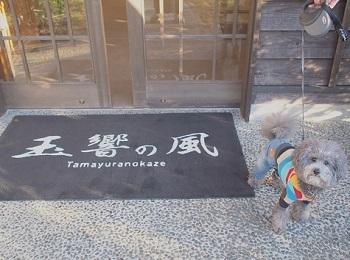 うちのこ記念旅行玉響の風20170307-1