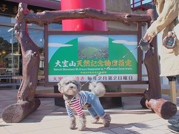 うちのこ記念旅行大室山20170308-1