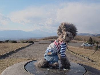 うちのこ記念旅行富士山20170308-2