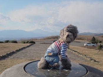 うちのこ記念旅行富士山20170308-3