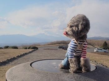 うちのこ記念旅行富士山20170308-4