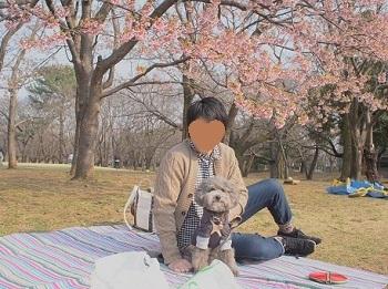 お花見20170319-1 -