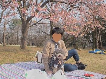 お花見20170319-2 -