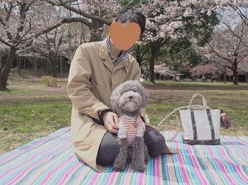お花見20170402-6