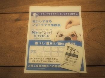 ノミマダニ駆除薬スタート20170415-1