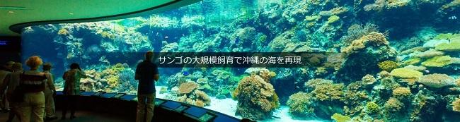 image-04.jpg