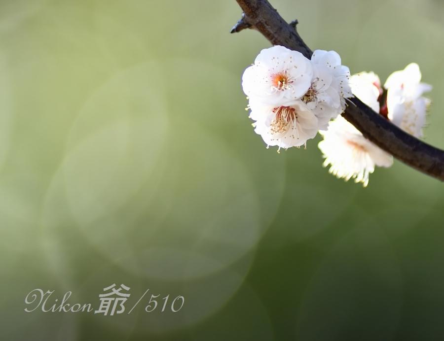 梅  (22)Sn_filtered