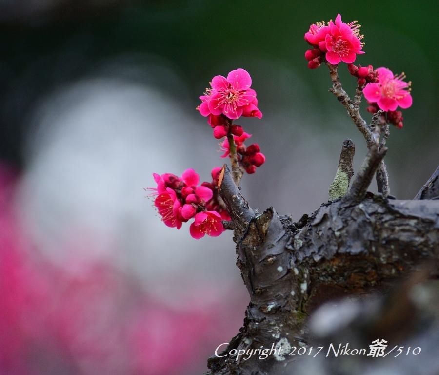 桐生南公園  (46)SN