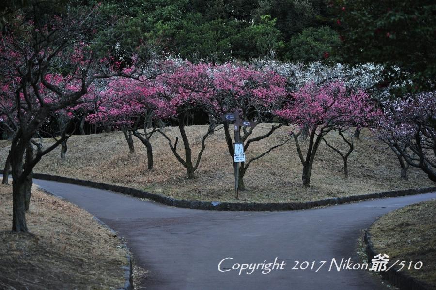 桐生南公園 (55)SN