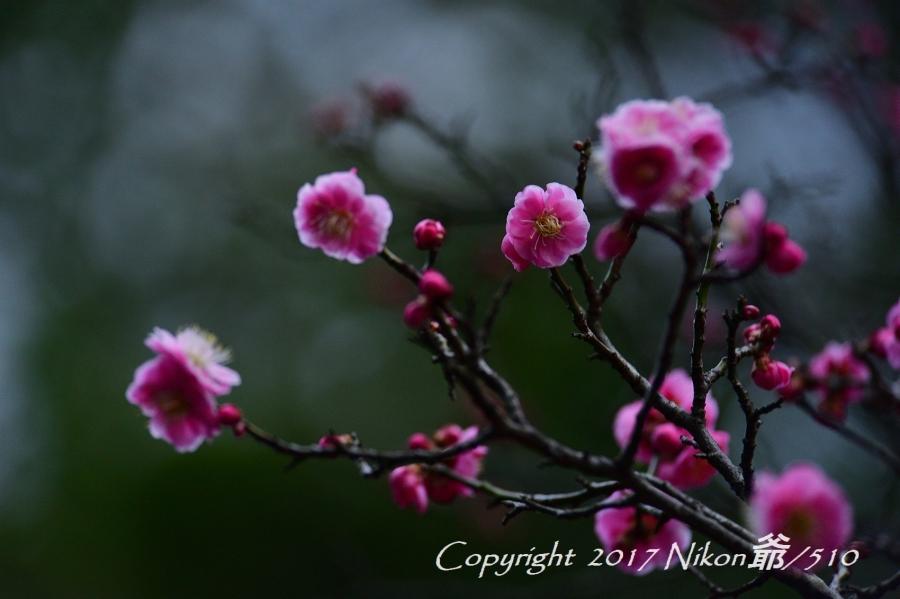 桐生南公園 (57)SN